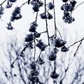 写真: 春の雨