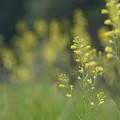 写真: 季節の流れに身を任せ