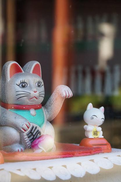 Photos: 招く猫