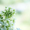 写真: 初夏の色