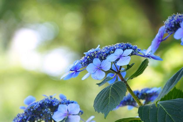 木陰のブルー