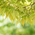 Photos: 公園の緑