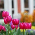 春色とりどり