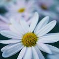 写真: 花開く