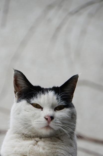 明日は猫の日