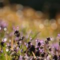 写真: 野の輝き