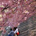 Photos: 花と語らい