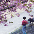 Photos: 桜記念日