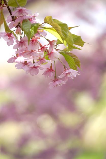 写真: 春の色