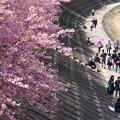 Photos: 花と花見