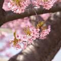 枝にとまる花
