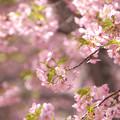写真: 花の命は短くて