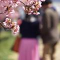 写真: 桜色の彼女