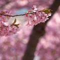 写真: 春の思い出