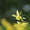Photos: うつむく花