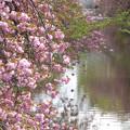 写真: 川面を彩る