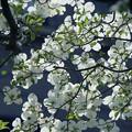写真: 群れる花