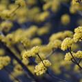 写真: 春の明かり