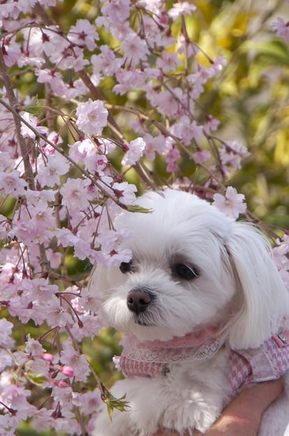 多分そんなに花見は好きじゃない