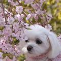 Photos: 多分そんなに花見は好きじゃない