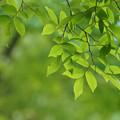 写真: 緑鮮やか
