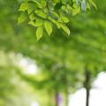 写真: 新緑の下を歩いて