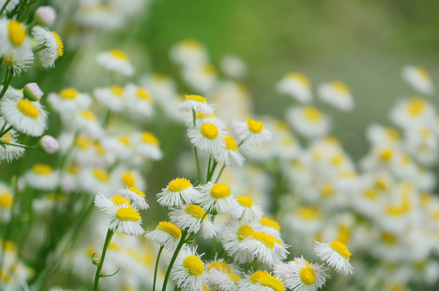 野の花満開