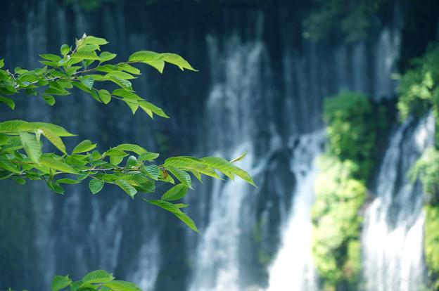 写真: 滝流れる