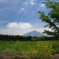 五月の富士
