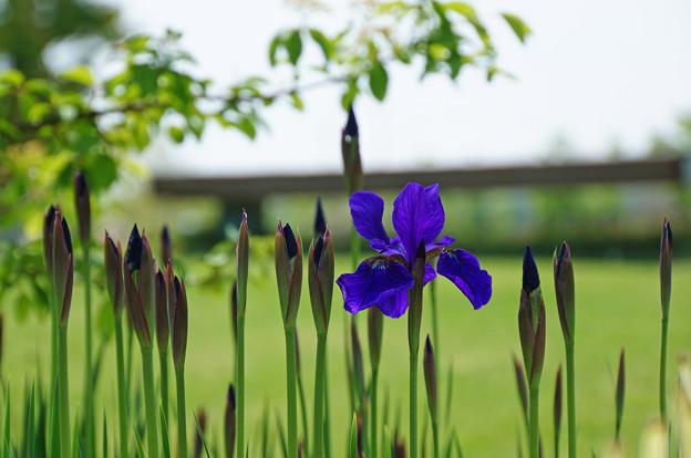 佇み咲く花