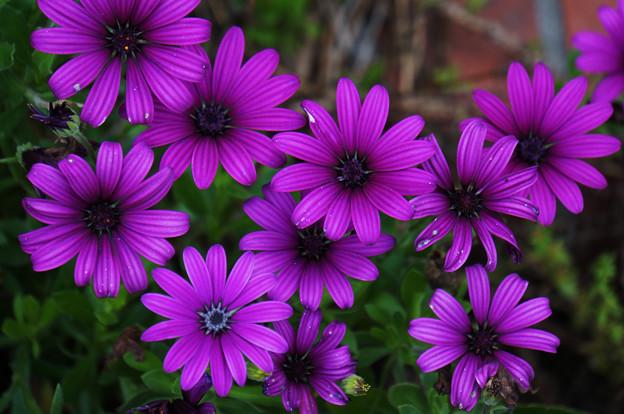 花開く午後