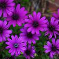 写真: 花開く午後
