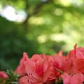 写真: 新緑と紅色