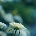 写真: 花咲く午後