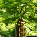 写真: 葱坊主と新緑