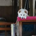 Photos: 屋根の上の犬