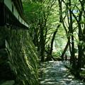 写真: 新緑の寺