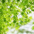 写真: 緑の窓口