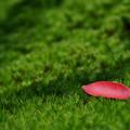 写真: 赤い小舟
