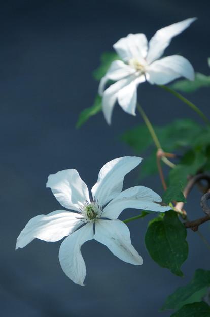 軒先に咲く花