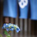 写真: 暖簾に紫陽花