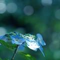 青のため息