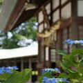 Photos: 社と紫陽花