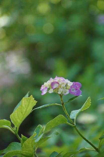 花咲き案内