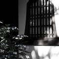 写真: 日陰に咲く