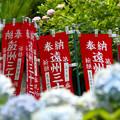 Photos: 遠州のあじさい寺