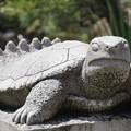 写真: 七つの尾を持つ亀
