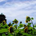 向日葵と庁舎の屋根