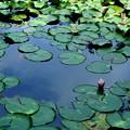 写真: 池の中の空