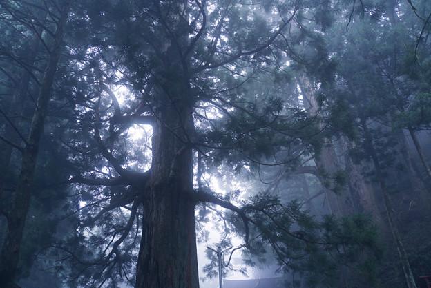 写真: 靄の中